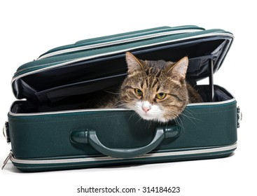 Grey cat sitting in a green suitcase, white background