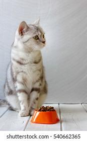 Grey cat sitting near orange cat bowl with food
