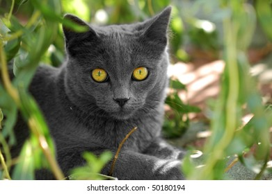Grey cat staring with wide open eyes from behind the branches