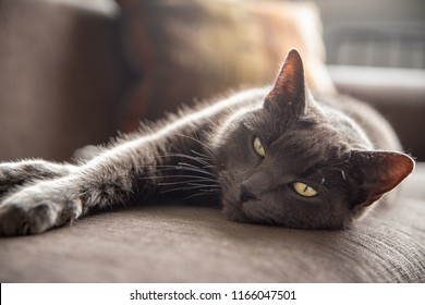 stretching cat images stock photos  vectors  shutterstock