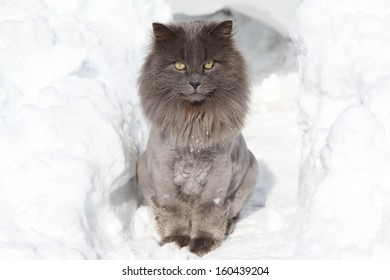 Grey cat in the white snow