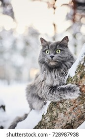 Grey cat in winter forest