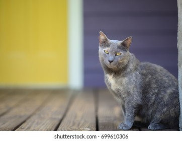 Grey cat with yellow eyes on wooden porch with yellow door in background