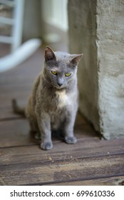 Grey cat with yellow eyes on wooden porch