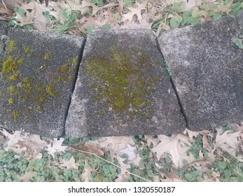 grey cement tiles or stones with green moss