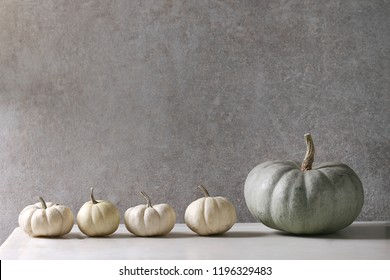 Grey Confection and white whole uncooked decorative pumpkins in row on white marble table with grey wall at background. Autumn minimalist decoration.