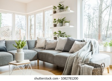 Grey corner couch with pillows and blankets in white living room interior with windows, glass door and fresh tulips on an end table