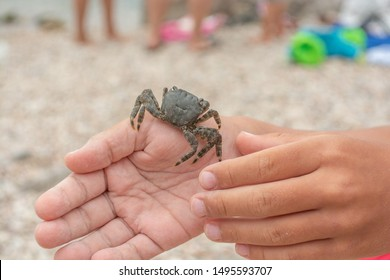 Grey crab sitting on the child's hand. White European child is holding in hand a small crab