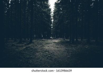 Grey dark forest. Creepy Mood