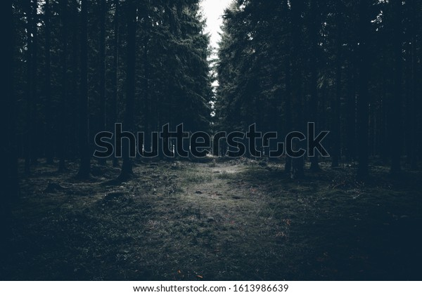 Grey dark forest. Creepy Mood
