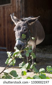 Grey donkey outdoors in springtime