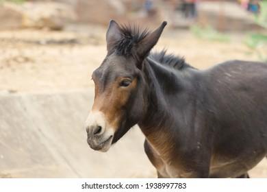 Grey donkey stand in field.