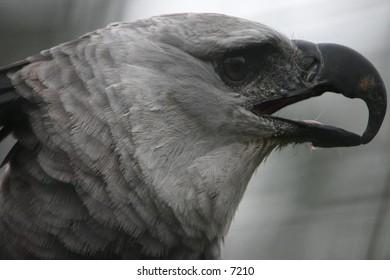 grey exotic bird