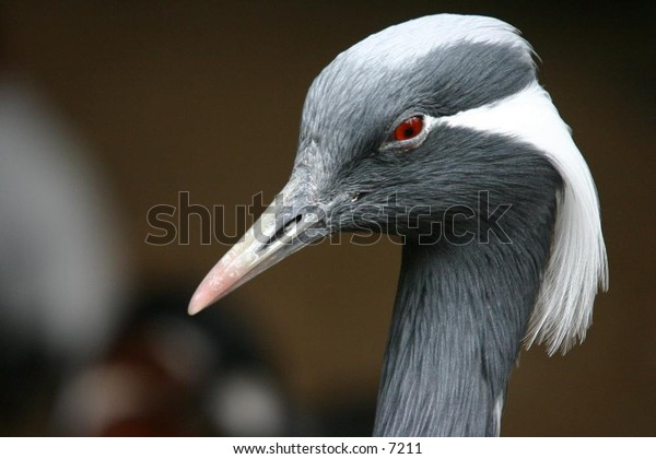 grey exotic bird