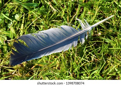 Grey feather on green grass