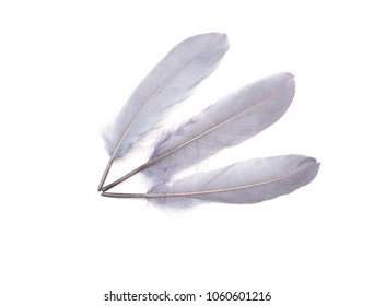 Grey feathers on a white background