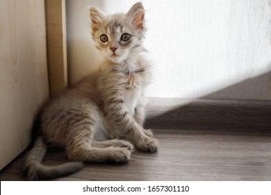 Grey furry kitten sits in the corner.