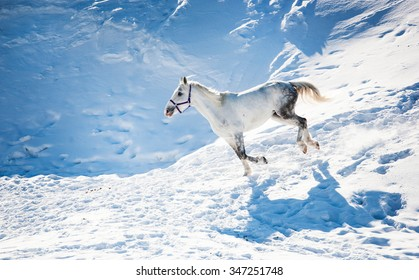Grey horse galloping across the snow-covered field