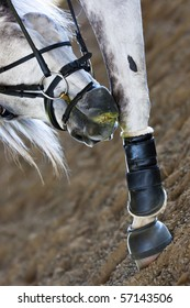 A grey horse with an itch on its' leg