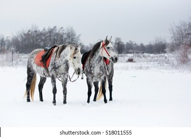 Grey horses on white snow