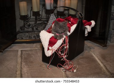 A grey kitten in a Christmas basket by the fireplace.