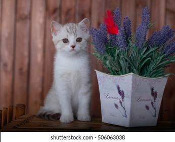 grey kitten sitting near flowers