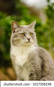Grey kitty cat portrait outdoors