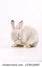 Grey little baby rabbit on white background. Adorable gray young bunny action
