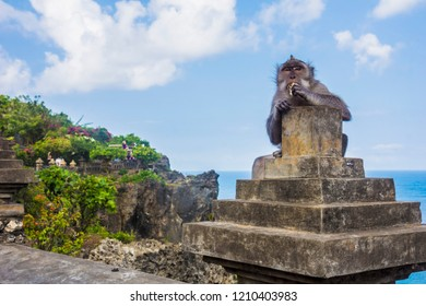 Grey long-tailed macaque monkey eating at the Uluwatu Temple in Bali, Indonesia.
