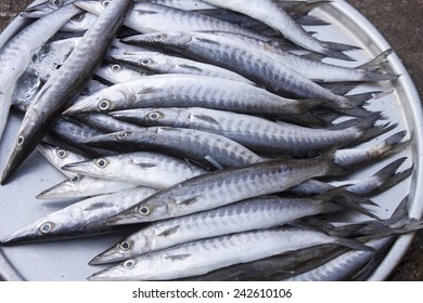A lot of grey, mackerel fish, at a market