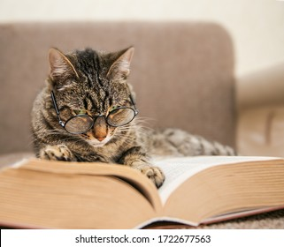 A grey mongrel cat lies next to an open book with glasses