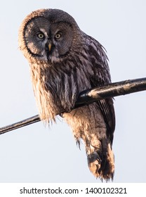 Grey owl sits on electronics tubes