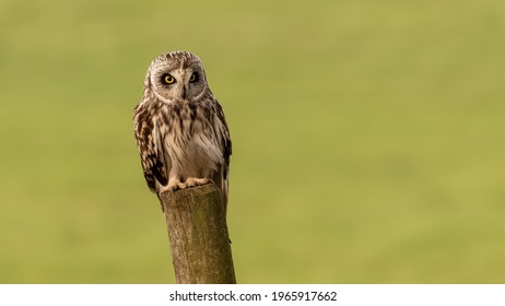 A Grey Owl Sitting on Tree Branch with Green Blurred Background