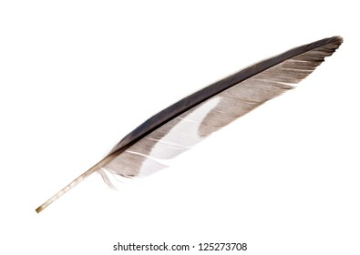 grey parrot feather isolated on white background