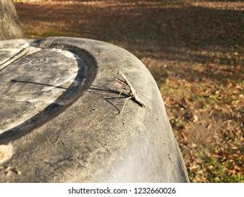 grey praying mantis insect on black plastic barrel