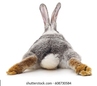 Grey rabbit isolated on a white background.