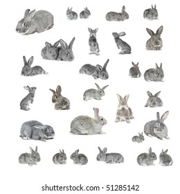 grey rabbits on a white background