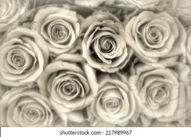 grey roses background