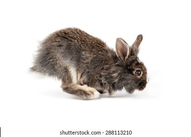 Grey running rabbit isolated on a white background