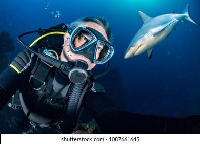 Grey shark ready to attack a scuba diver