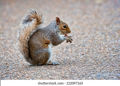 Rats with Pr Images, Stock Photos & Vectors | Shutterstock