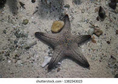grey starfish in the water and sand