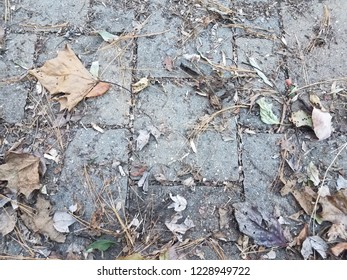 grey stone tiles and pine needles and leaves