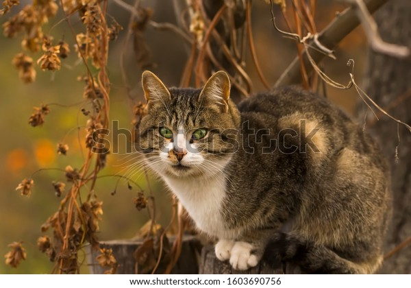 Grey striped cat, with green eyes, sits on a stump in a dry autumn garden. Portrait of a pet, close-up, in the open air.