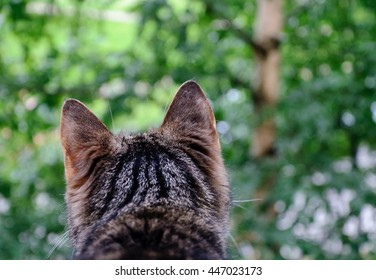 Grey striped cat looking through a open window to the outside.