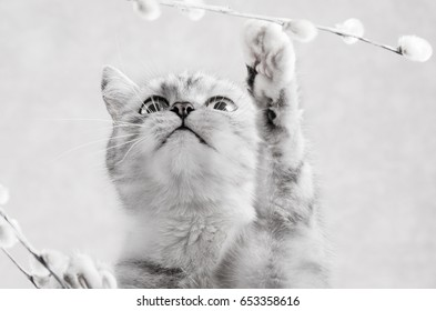 Grey striped cat playing with a branch