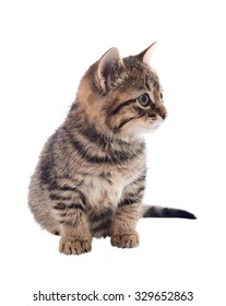 Grey striped kitten with an attentive eye. isolated