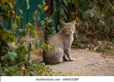 grey tabby beautiful cat sitting on the street with a sad look