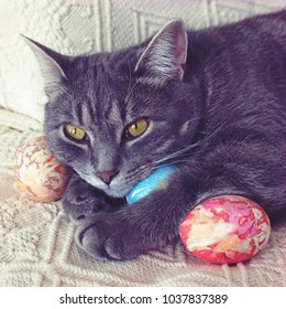 Grey tabby cat with hand decorated easter eggs. Kitten on an easter egg hunt. Cute spring photo with natural light and pastel colours.