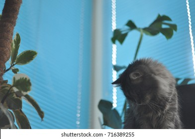 Grey tabby cat with monstera (philodendron) and blue jalousie on the background